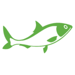 green spawn fish white & mod - transparent